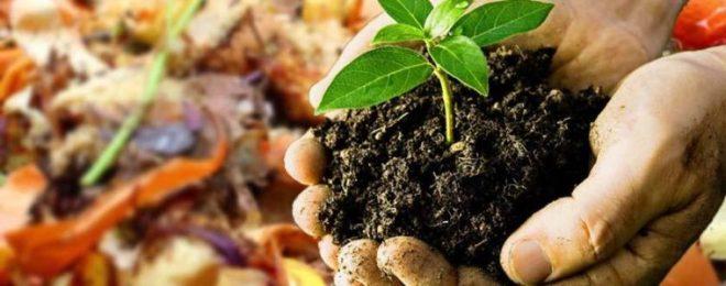 Biochar Using as fertilizer